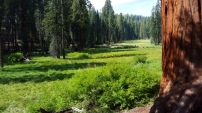 Sequoia Field